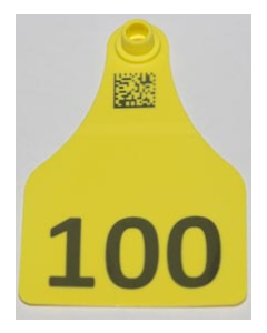 Cow Tags with Numbers Only + Space for 2 Lines of Text