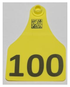 Cow Tags with Numbers Only + Space for 1 Line of Text